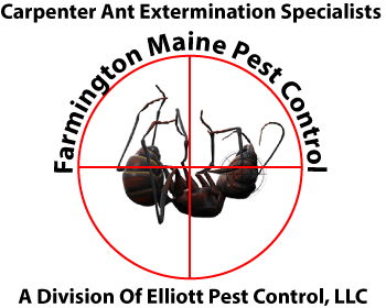 Farmington Maine Pest Control - Carpenter Ant Eradication - a division of Elliott Pest Control Of Rangeley Maine
