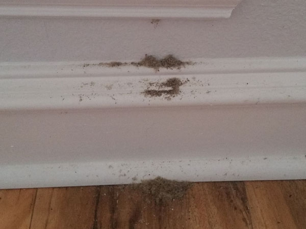 You need carpenter ant erradication if you see this type of sawdust arount wood.Thanks to Thadguidry, CC0, via Wikimedia Commons.